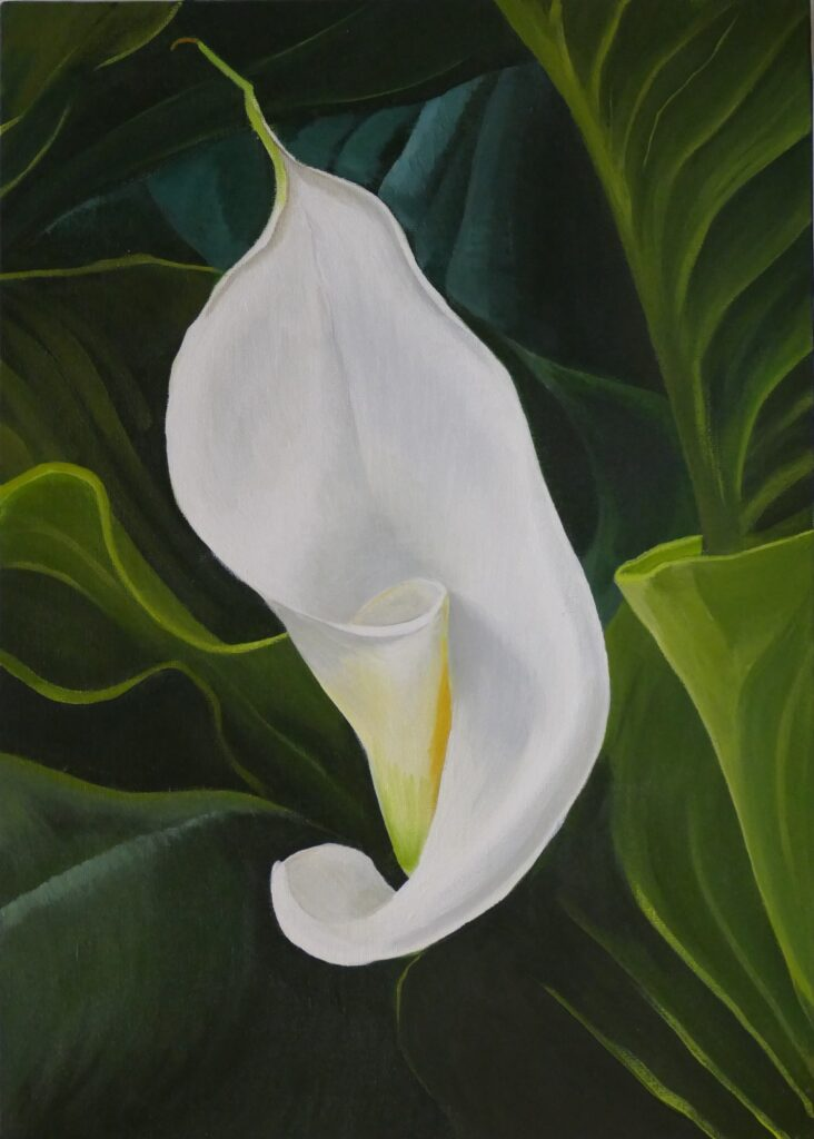 Painitng of a lily unfurling